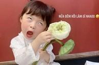 Háo hức rủ cháu gái 3 tuổi chụp ảnh cùng hoa sen, bác gái dở khóc dở cười với cái kết hài 'nhức nách'