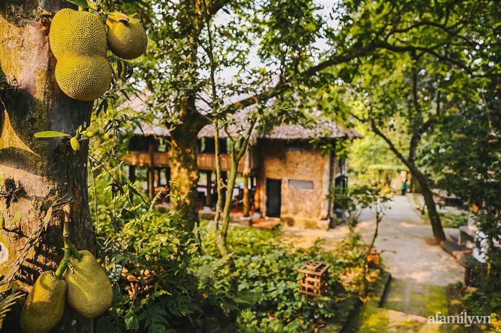 Cuộc sống yên bình trong ngôi nhà nhỏ và khu vườn xanh mát bóng cây ở ngoại thành Hà Nội-3