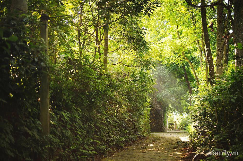 Cuộc sống yên bình trong ngôi nhà nhỏ và khu vườn xanh mát bóng cây ở ngoại thành Hà Nội-6