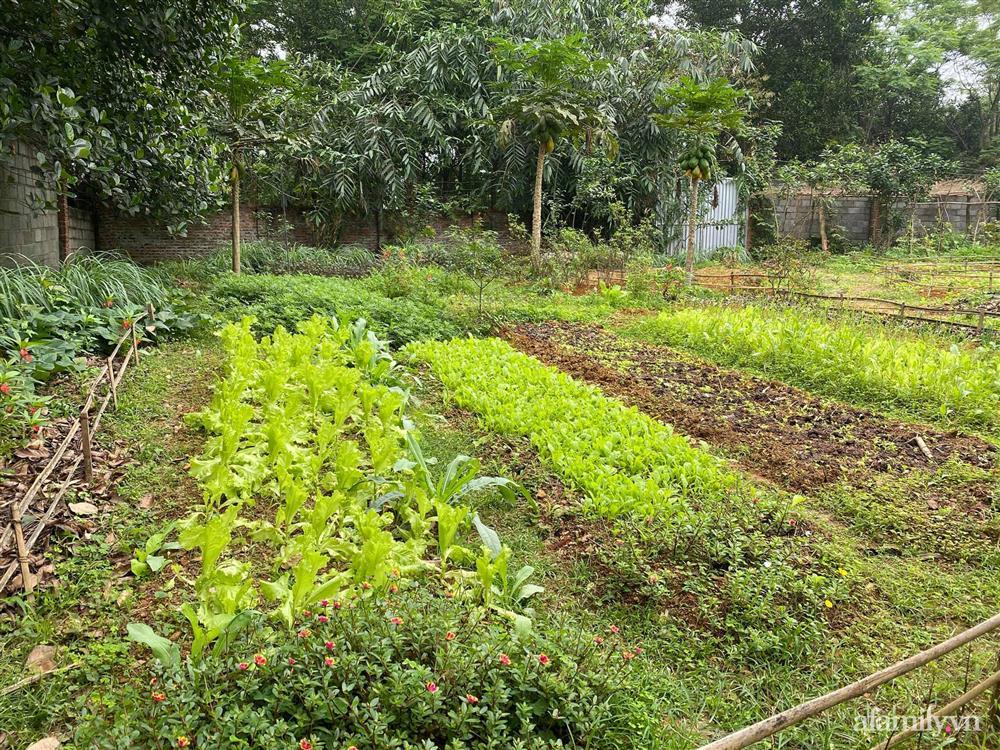 Cuộc sống yên bình trong ngôi nhà nhỏ và khu vườn xanh mát bóng cây ở ngoại thành Hà Nội-12