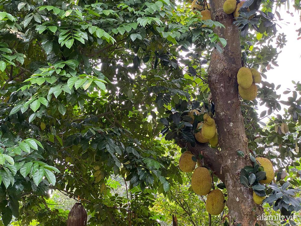 Cuộc sống yên bình trong ngôi nhà nhỏ và khu vườn xanh mát bóng cây ở ngoại thành Hà Nội-13