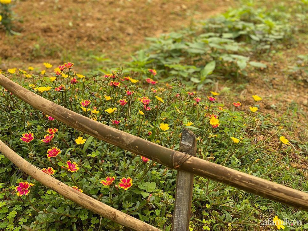 Cuộc sống yên bình trong ngôi nhà nhỏ và khu vườn xanh mát bóng cây ở ngoại thành Hà Nội-15