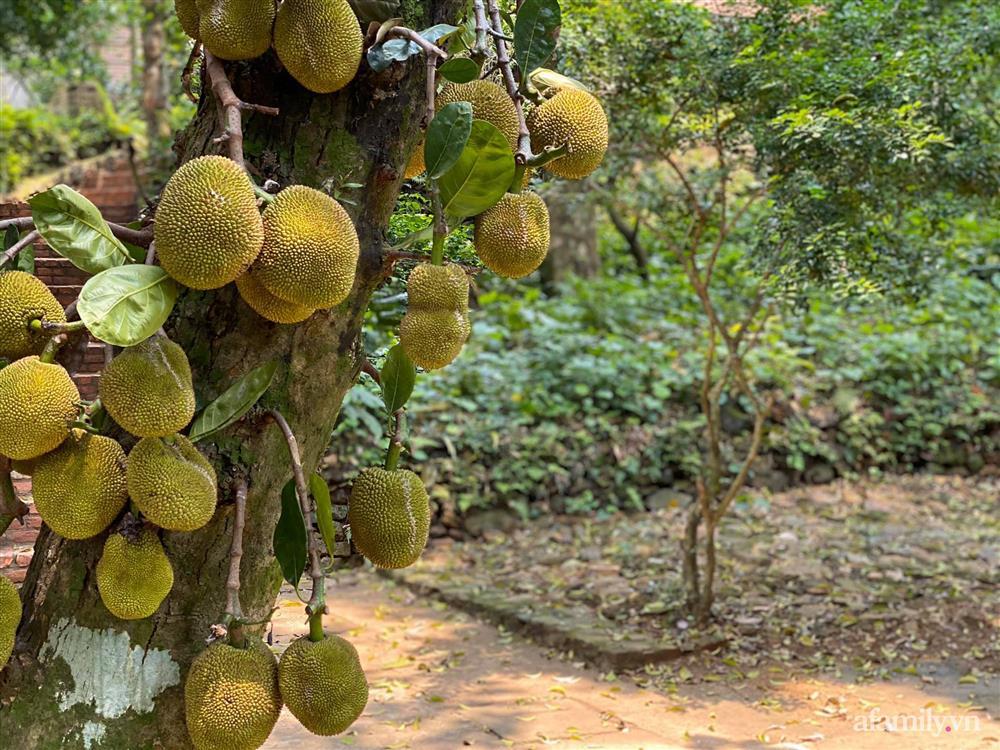 Cuộc sống yên bình trong ngôi nhà nhỏ và khu vườn xanh mát bóng cây ở ngoại thành Hà Nội-21