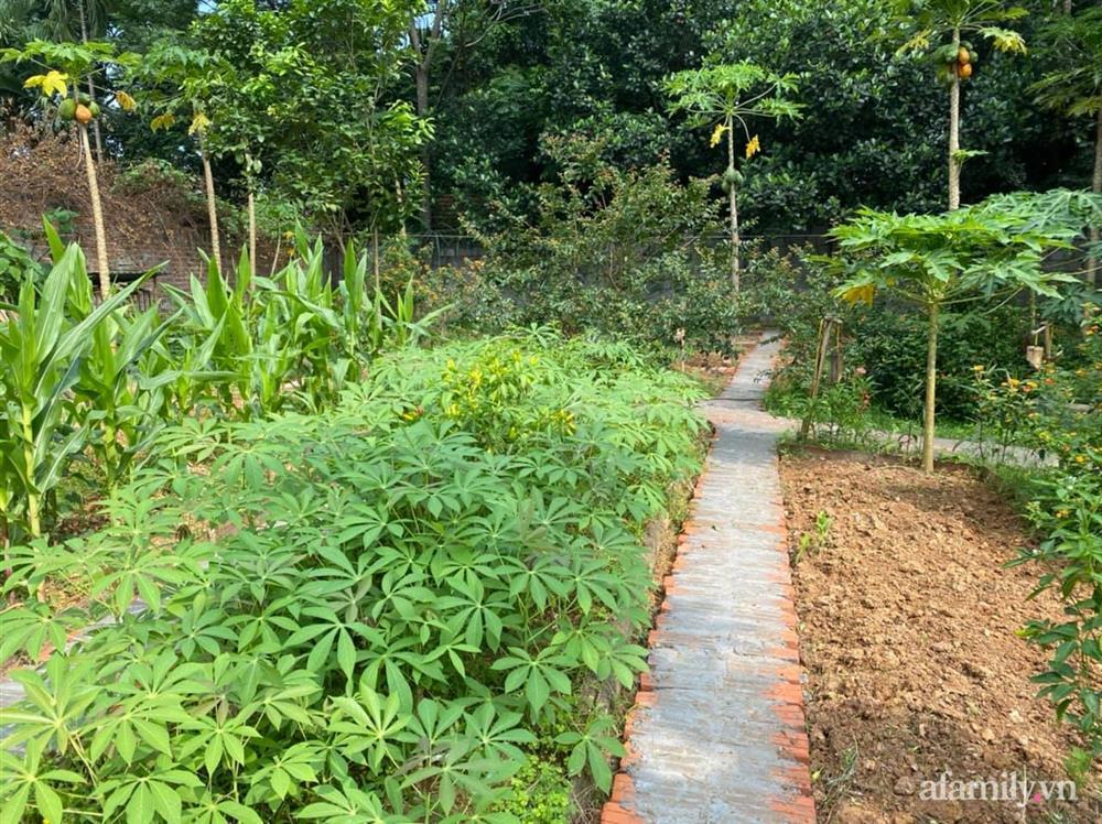 Cuộc sống yên bình trong ngôi nhà nhỏ và khu vườn xanh mát bóng cây ở ngoại thành Hà Nội-22