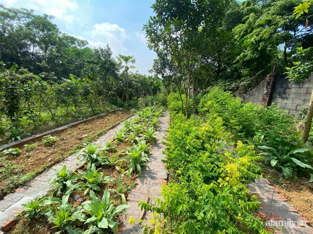 Cuộc sống yên bình trong ngôi nhà nhỏ và khu vườn xanh mát bóng cây ở ngoại thành Hà Nội-28