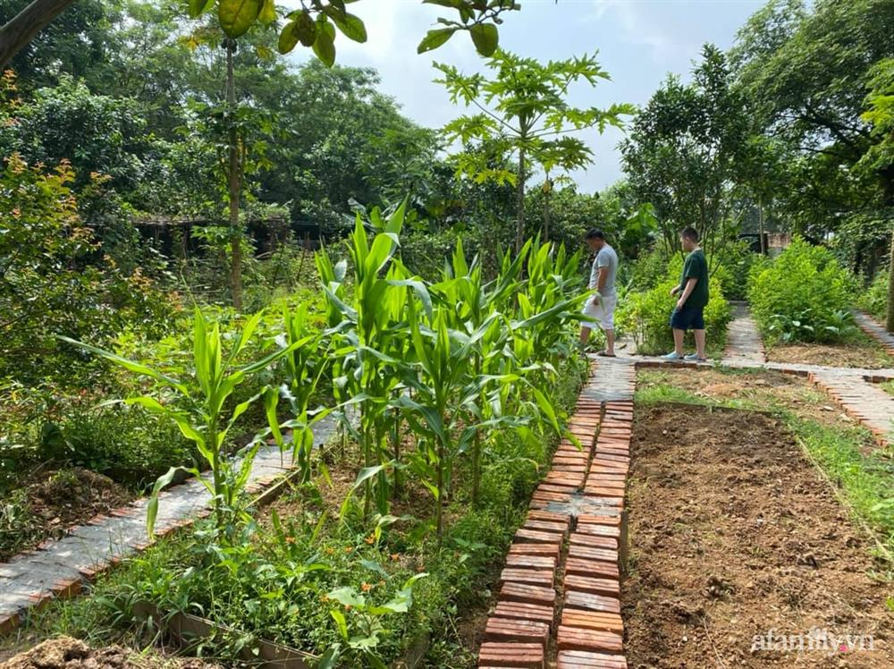 Cuộc sống yên bình trong ngôi nhà nhỏ và khu vườn xanh mát bóng cây ở ngoại thành Hà Nội-29