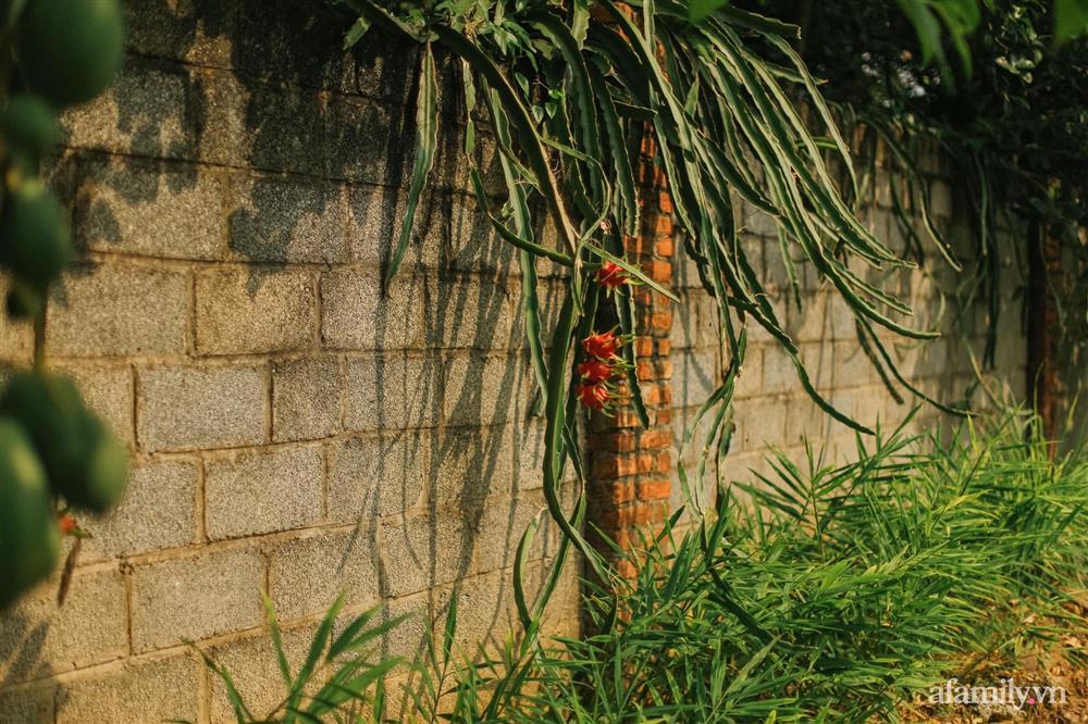 Cuộc sống yên bình trong ngôi nhà nhỏ và khu vườn xanh mát bóng cây ở ngoại thành Hà Nội-30