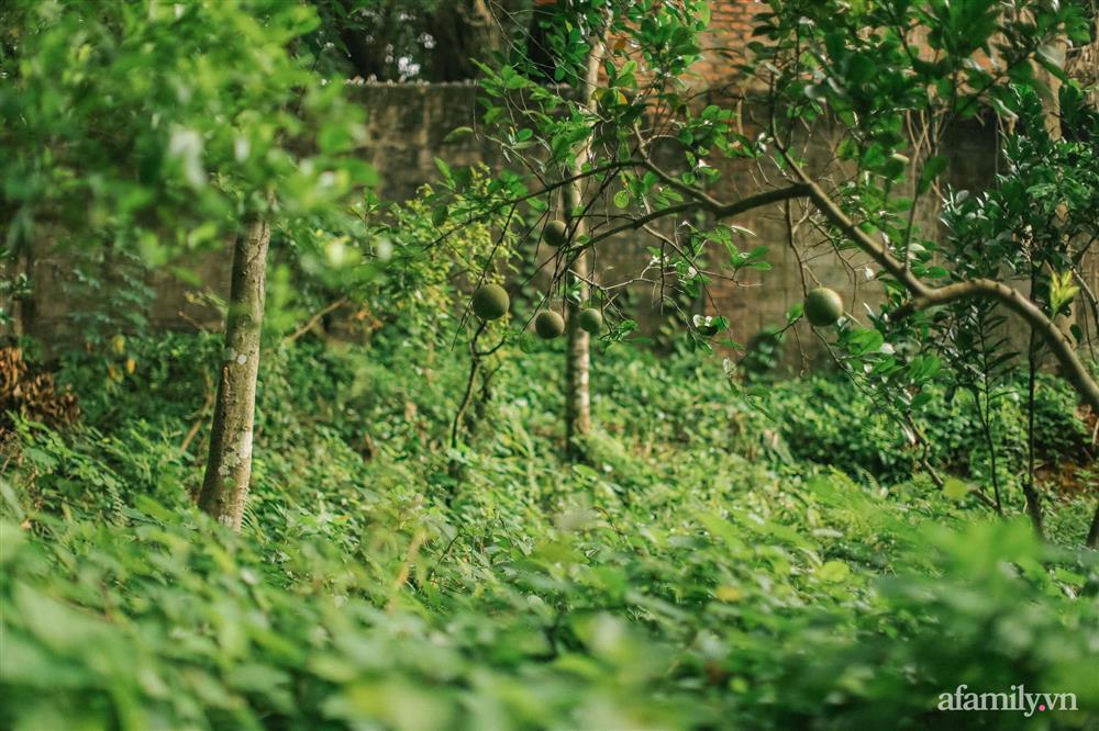 Cuộc sống yên bình trong ngôi nhà nhỏ và khu vườn xanh mát bóng cây ở ngoại thành Hà Nội-31