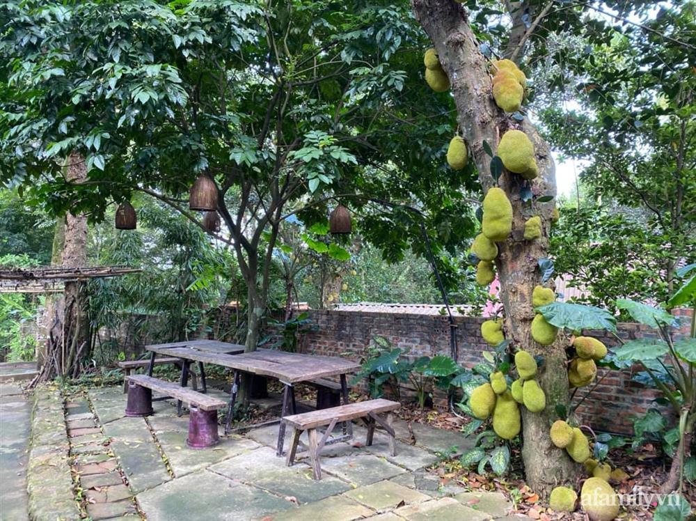 Cuộc sống yên bình trong ngôi nhà nhỏ và khu vườn xanh mát bóng cây ở ngoại thành Hà Nội-35