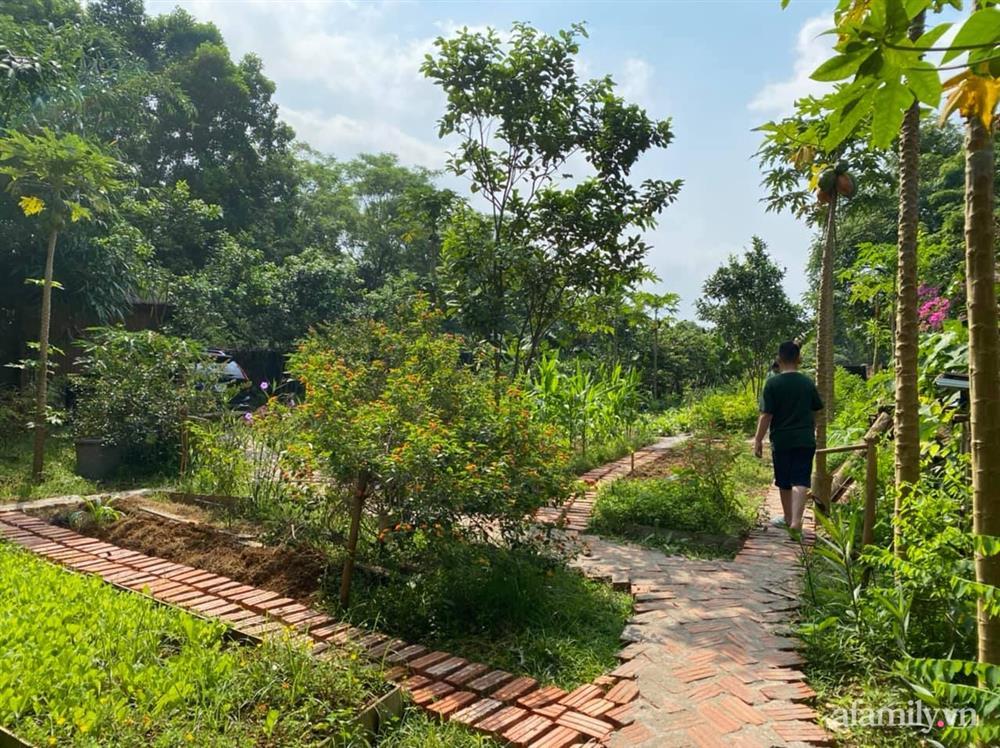 Cuộc sống yên bình trong ngôi nhà nhỏ và khu vườn xanh mát bóng cây ở ngoại thành Hà Nội-37