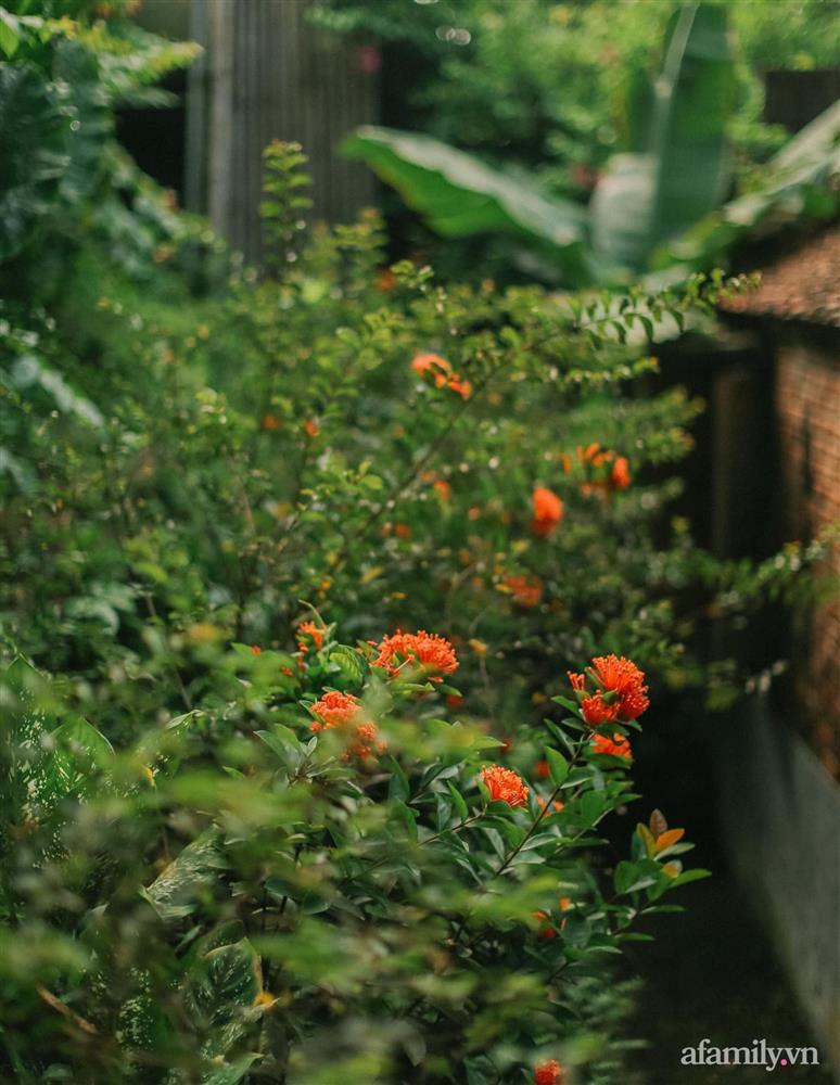 Cuộc sống yên bình trong ngôi nhà nhỏ và khu vườn xanh mát bóng cây ở ngoại thành Hà Nội-39