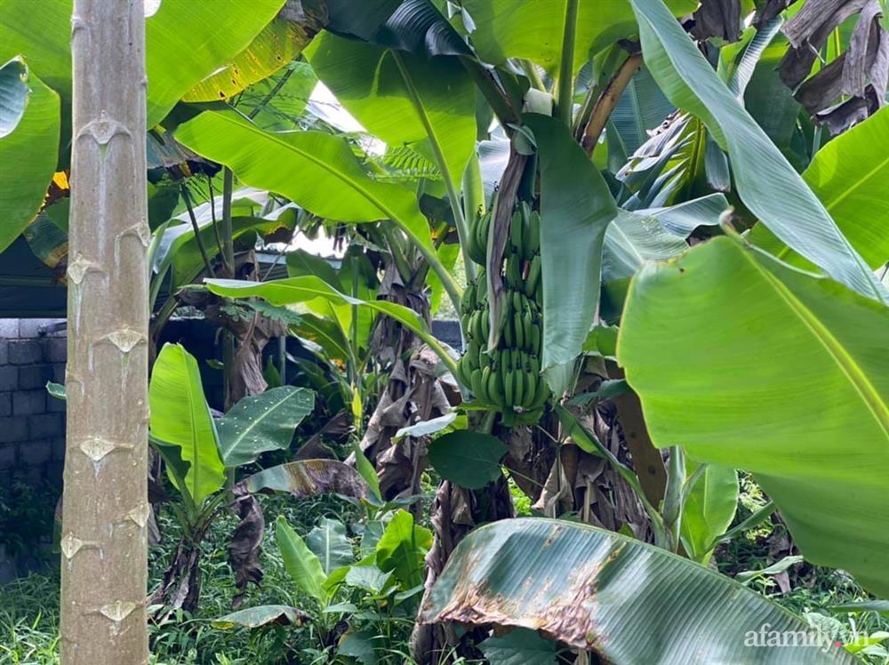 Cuộc sống yên bình trong ngôi nhà nhỏ và khu vườn xanh mát bóng cây ở ngoại thành Hà Nội-41