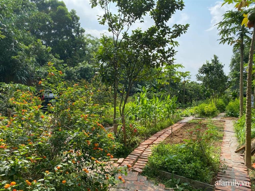 Cuộc sống yên bình trong ngôi nhà nhỏ và khu vườn xanh mát bóng cây ở ngoại thành Hà Nội-42