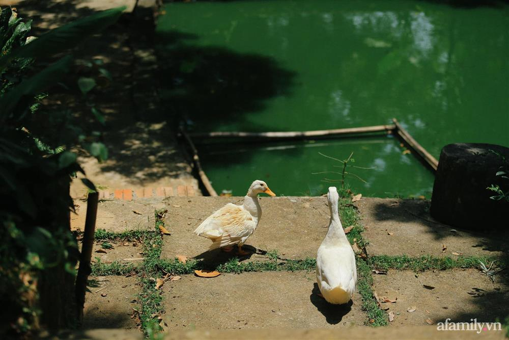 Cuộc sống yên bình trong ngôi nhà nhỏ và khu vườn xanh mát bóng cây ở ngoại thành Hà Nội-45