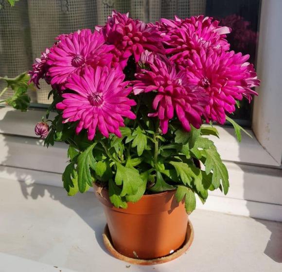 10 loại cây gia chủ nên trồng trong hoặc xung quanh nhà, vừa đẹp lại giúp xua đuổi muỗi và bọ một cách tự nhiên-1