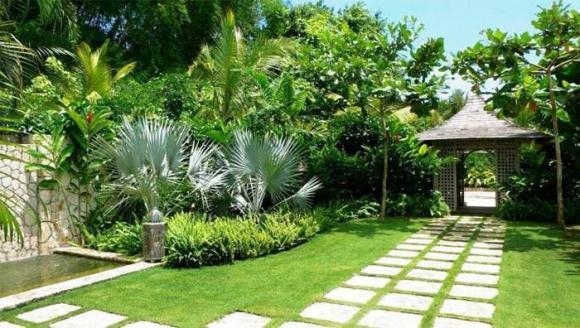 Muốn thay đổi vận khí, chuyển mình giàu có, hãy trồng ngay cây phong thủy ở 3 vị trí này-1