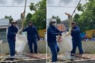 Xôn xao hình ảnh 2 người đàn ông chật vật bắt 'trăn khủng' cuộn tròn trên cây xanh ven đường