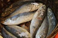 Mua cá, nếu gặp 5 loại cá này cần quay lưng bỏ đi ngay