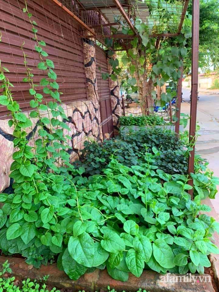 Khu vườn trước cửa xanh mát với đủ loại rau củ của chàng trai Việt ở châu Phi-2