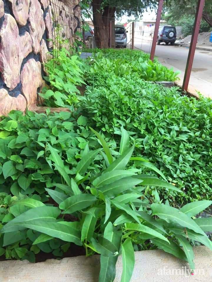 Khu vườn trước cửa xanh mát với đủ loại rau củ của chàng trai Việt ở châu Phi-3