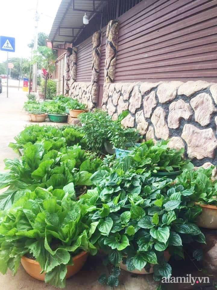 Khu vườn trước cửa xanh mát với đủ loại rau củ của chàng trai Việt ở châu Phi-7