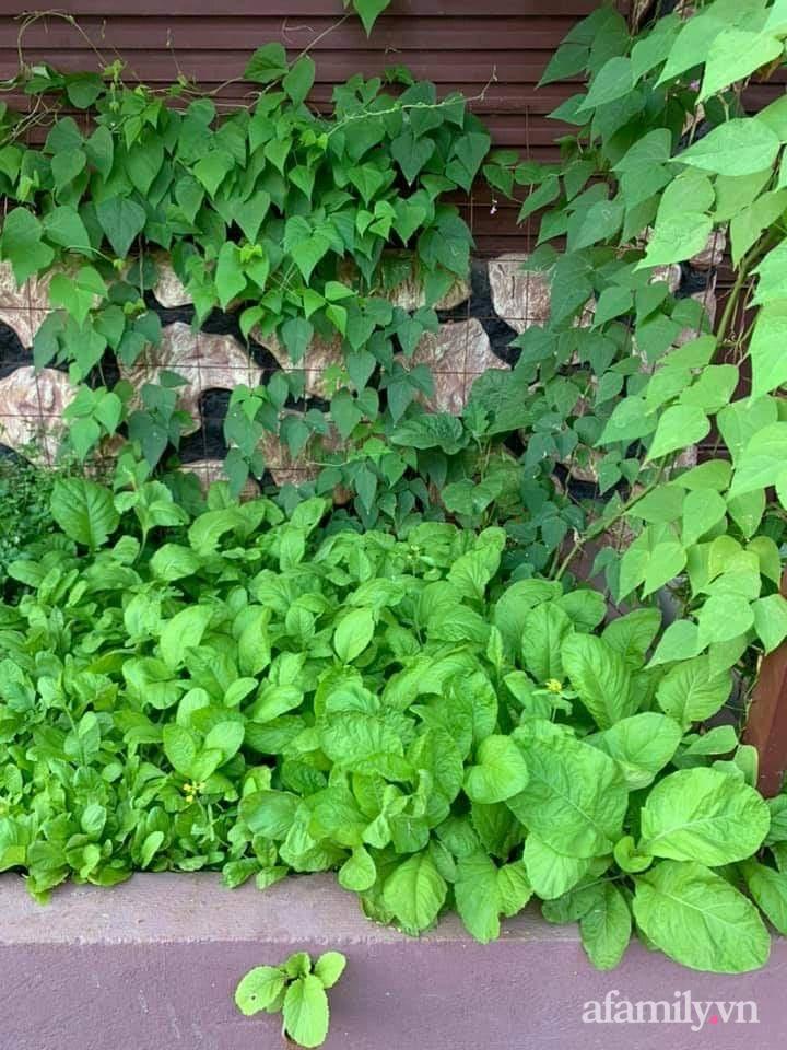 Khu vườn trước cửa xanh mát với đủ loại rau củ của chàng trai Việt ở châu Phi-10