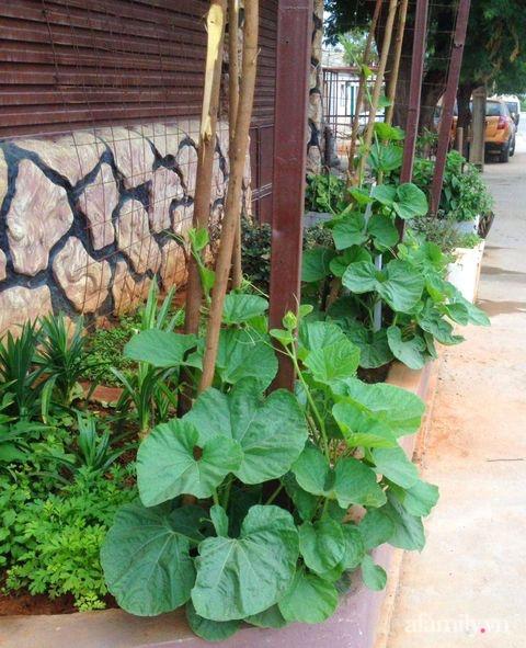 Khu vườn trước cửa xanh mát với đủ loại rau củ của chàng trai Việt ở châu Phi-11