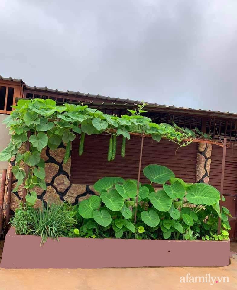 Khu vườn trước cửa xanh mát với đủ loại rau củ của chàng trai Việt ở châu Phi-12