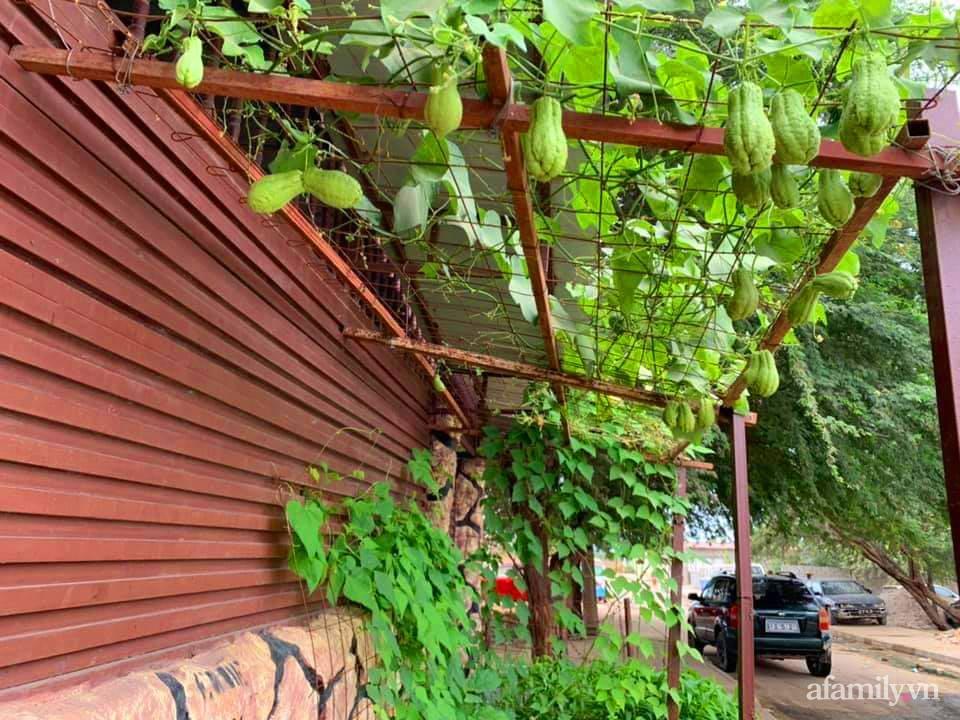 Khu vườn trước cửa xanh mát với đủ loại rau củ của chàng trai Việt ở châu Phi-13