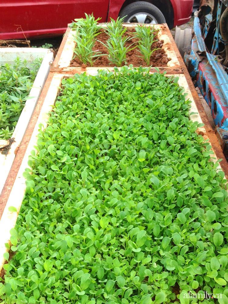 Khu vườn trước cửa xanh mát với đủ loại rau củ của chàng trai Việt ở châu Phi-19