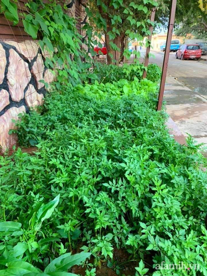 Khu vườn trước cửa xanh mát với đủ loại rau củ của chàng trai Việt ở châu Phi-20