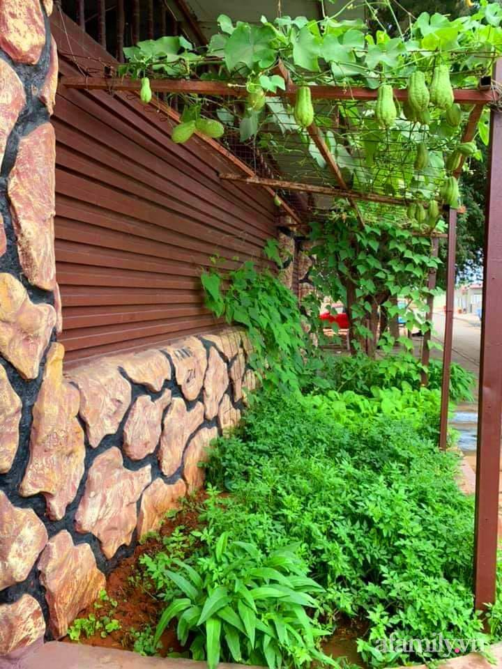 Khu vườn trước cửa xanh mát với đủ loại rau củ của chàng trai Việt ở châu Phi-22
