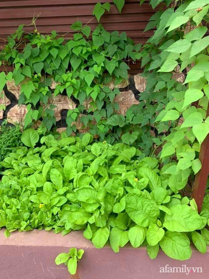 Khu vườn trước cửa xanh mát với đủ loại rau củ của chàng trai Việt ở châu Phi-24