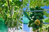 Sân thượng 40m² xanh mát quanh năm với đủ loại rau quả sạch của người phụ nữ về hưu ở Vũng Tàu