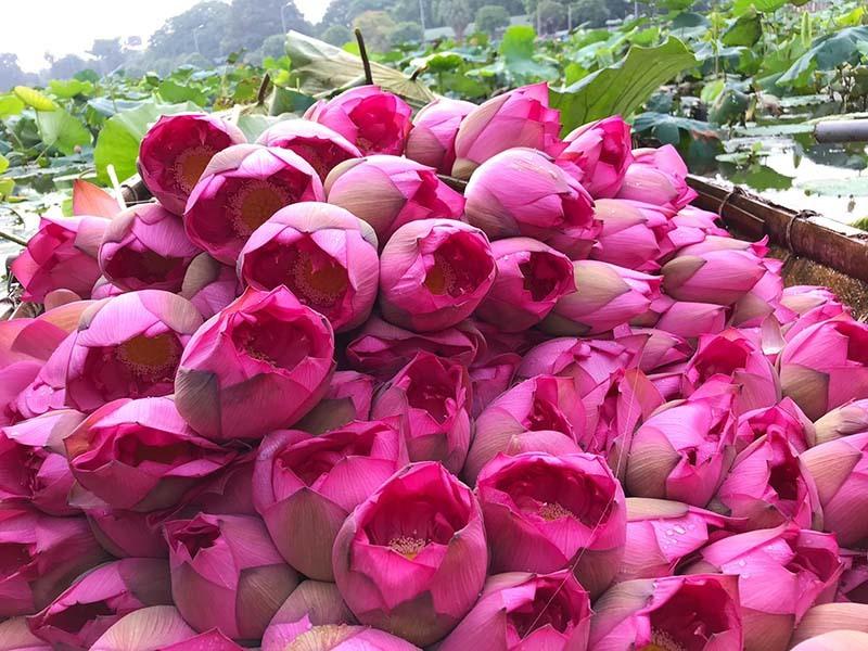 Đặc sản Hà thành năm chỉ có một mùa, mua trăm bông cất tủ dùng dần-2