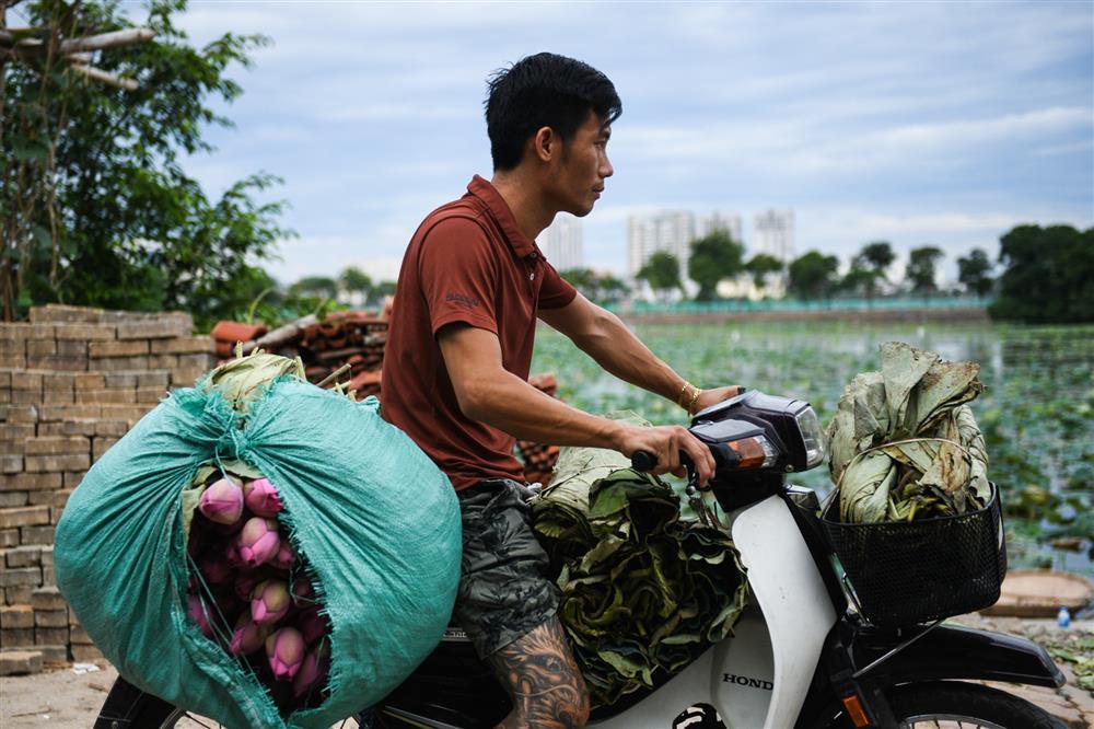 Chủ đầm sen hồ Tây bán hàng nghìn bông mỗi ngày-6