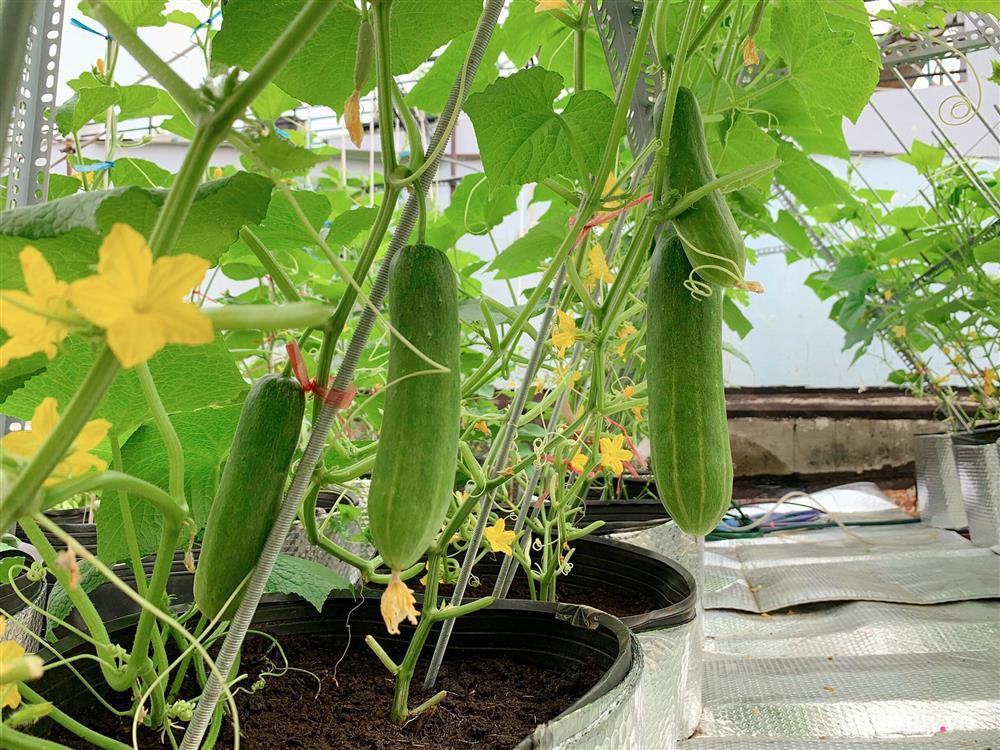 Khu vườn xanh tươi trên mái nhà và bí quyết đáng học hỏi của mẹ 3 con ở Sài Gòn-13