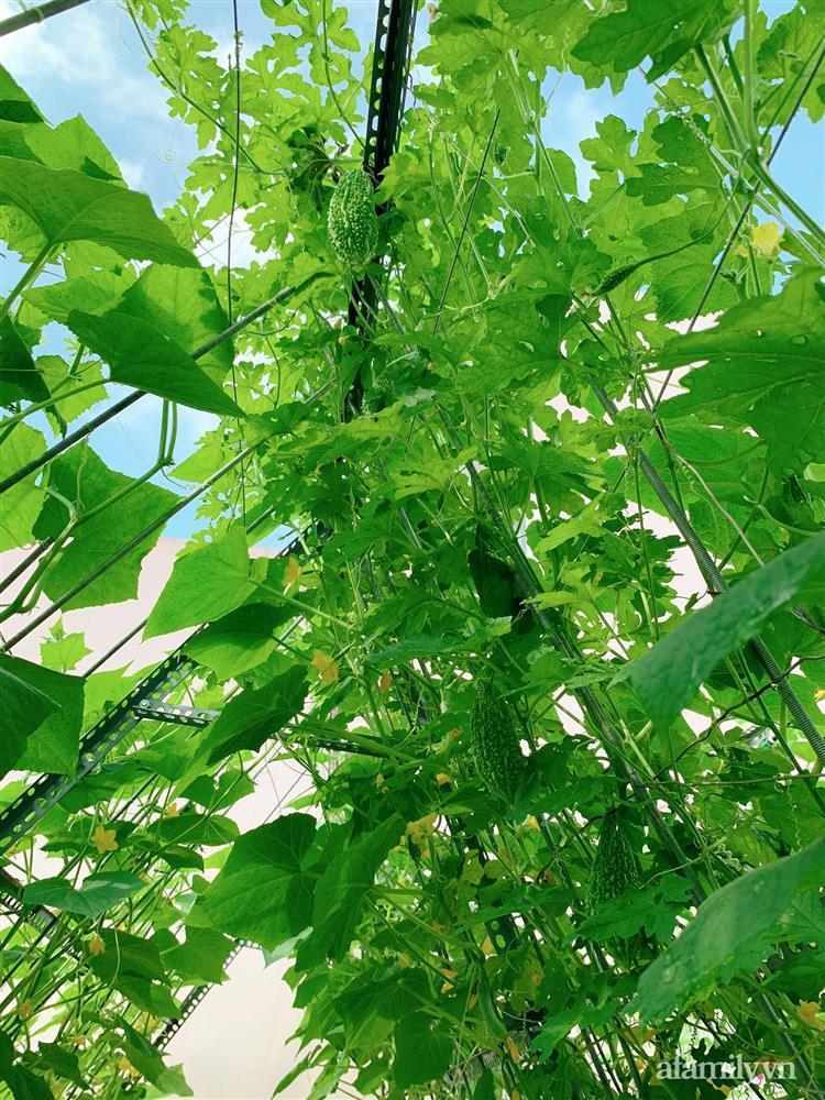 Khu vườn xanh tươi trên mái nhà và bí quyết đáng học hỏi của mẹ 3 con ở Sài Gòn-17