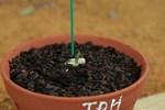 Giết chết lan 5 cánh trắng Bạch Tuyết tiền tỷ: Trò cũ-2