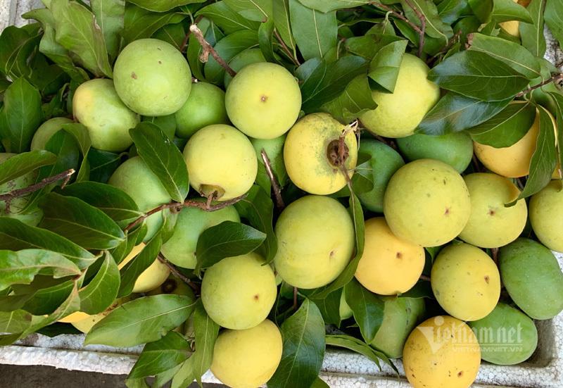 Thơm lừng hương cổ tích, Hà Thành lùng mua loại quả vàng ươm-3