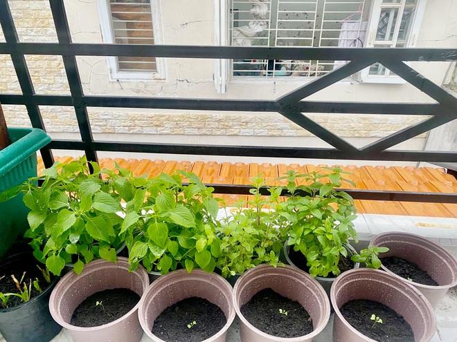 Dân Sài Gòn thích làm vườn mùa dịch, giới kinh doanh cây trồng hốt bạc-1