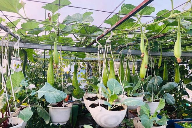 Dân Sài Gòn thích làm vườn mùa dịch, giới kinh doanh cây trồng hốt bạc-3