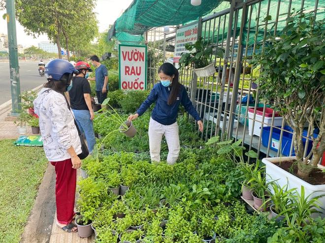 Dân Sài Gòn thích làm vườn mùa dịch, giới kinh doanh cây trồng hốt bạc-4