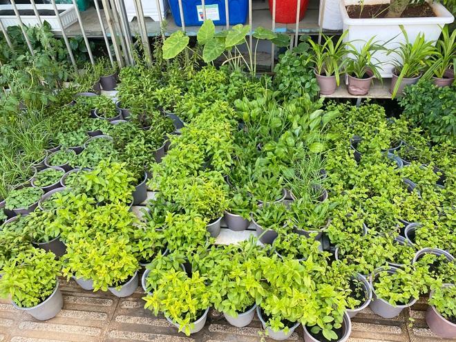 Dân Sài Gòn thích làm vườn mùa dịch, giới kinh doanh cây trồng hốt bạc-5