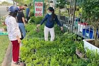 Dân Sài Gòn thích làm vườn mùa dịch, giới kinh doanh cây trồng 'hốt bạc'