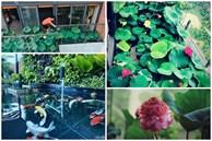 'Hồ sen' với đủ loại hoa hiếm trên penthouse 300m² của chồng dành tặng vợ ở Hà Nội
