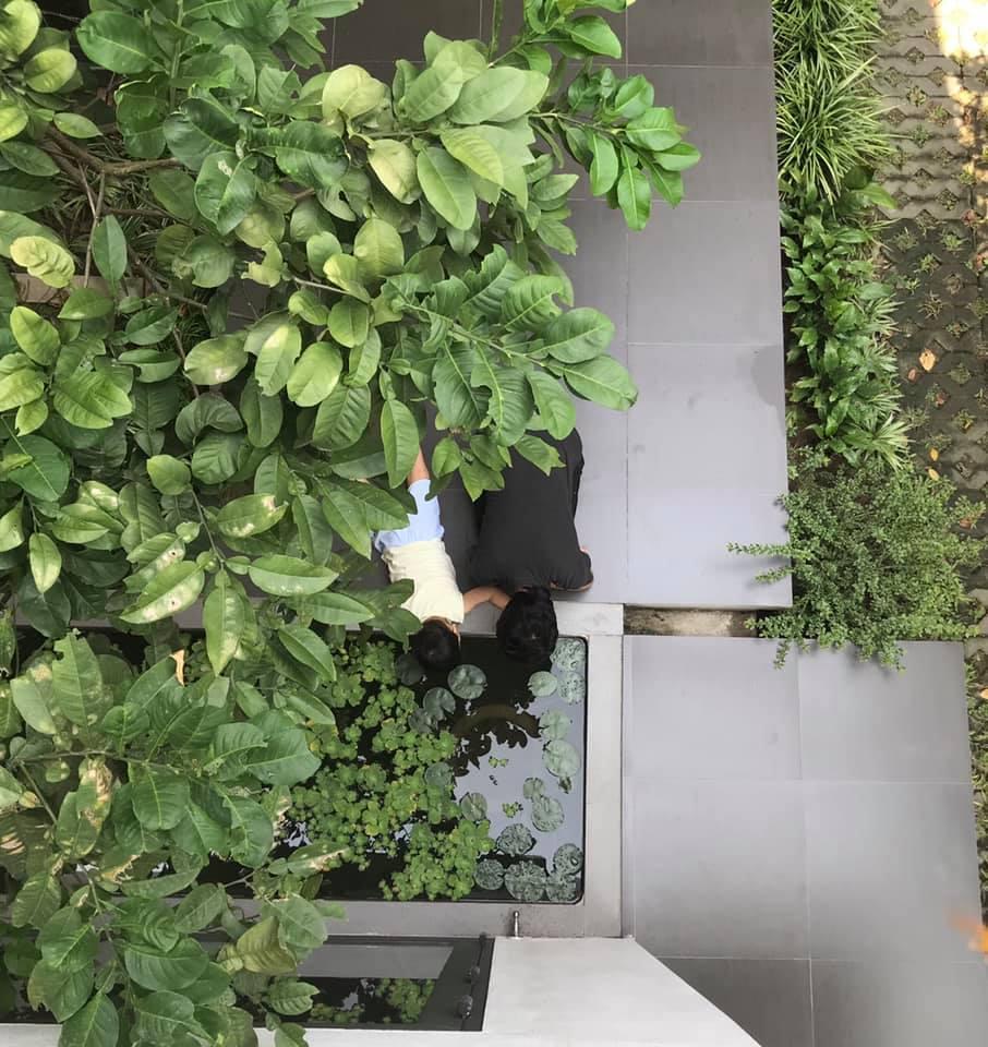 Ngẩn ngơ trước khu vườn bí mật trong ngôi nhà màu trắng ở Hải Phòng-10