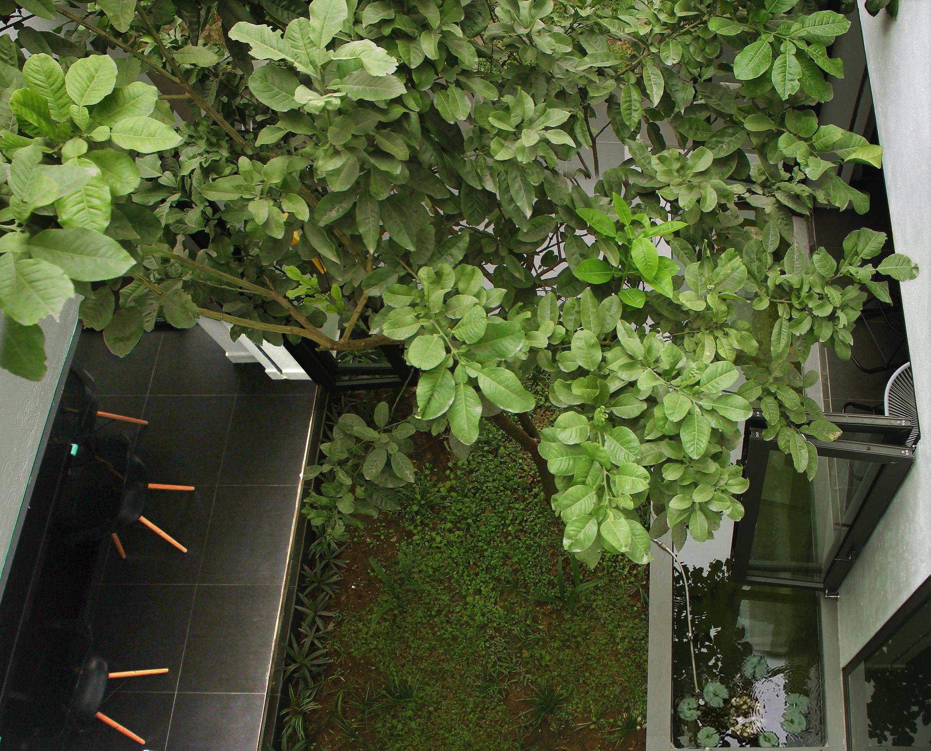 Ngẩn ngơ trước khu vườn bí mật trong ngôi nhà màu trắng ở Hải Phòng-9