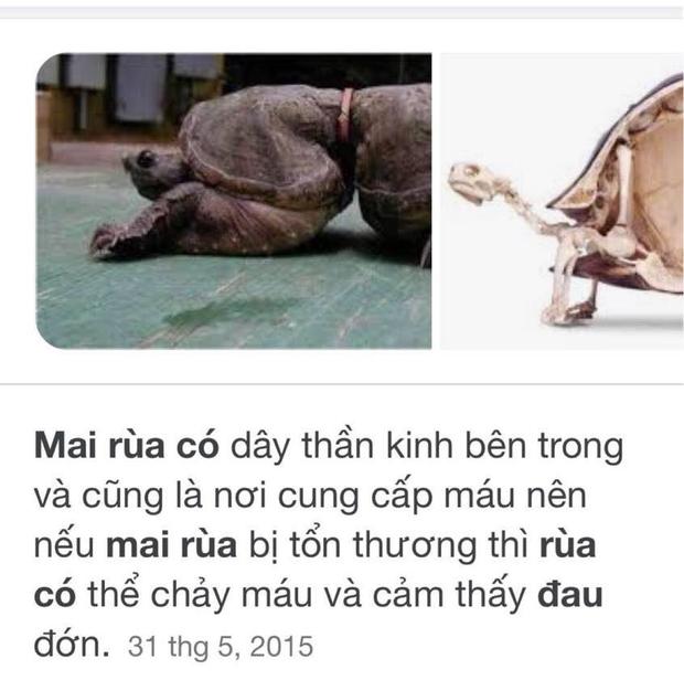 Tên Thuỷ Tiên và Công Vinh được khắc lên mai rùa phóng sinh, cư dân mạng chỉ trích vì hành động gây nguy hiểm tới loài vật này-7