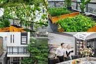 Vườn rau xanh mướt bên trong nhà phố của Lê Hoàng 'The Men'